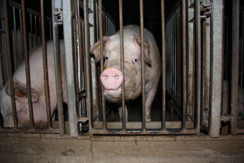 Bundesregierung will gegen TierschützerInnen vorgehen