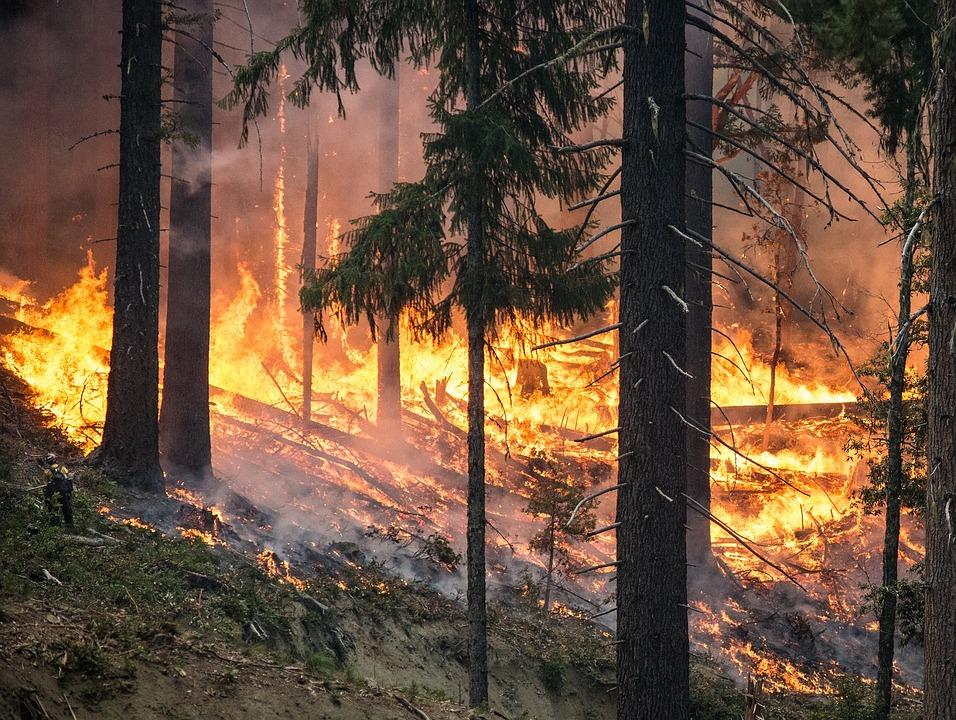 Waldbrände bei Athen töten über 50 Menschen